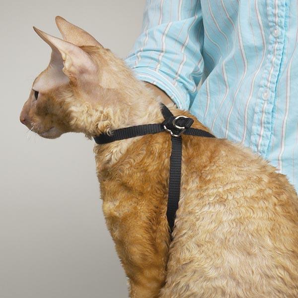 Упряжка для кота своими руками