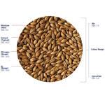 Organic Extra Pale Malt (Crisp), hel, 3 kg