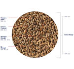 Naked Oat Malt (Crisp), whole, 1 kg