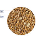 Flaked Torrefied Oats (Crisp), 25 kg