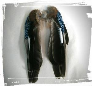 Nötskrike vinge