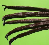 5 st Polynesiska vaniljstänger, Tahiti cirka 15 cm