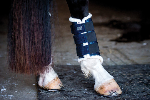 Dressage Boots, navy, hind legs