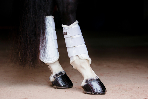 Dressage Boots, white, hind leg