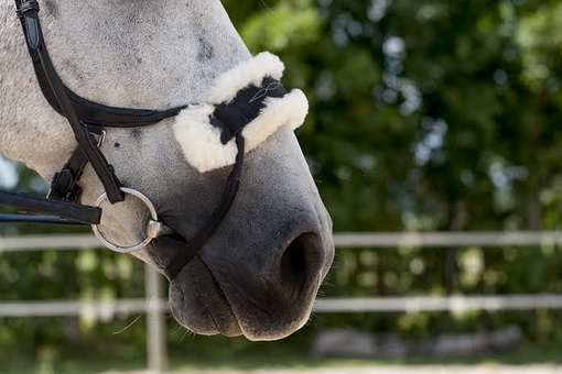 Noseplate Sheep Skin to High Jump Bridle