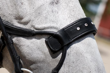 Noseplate Swarovski to High Jump Bridle