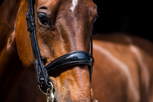 Double Bridle All In Revolution