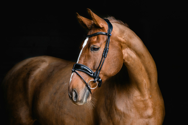Bridle Flying Change Deluxe Revolution