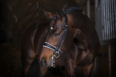 Double bridle Grand Prix Revolution