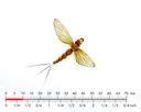 Mayfly Spent 4 Sulphur