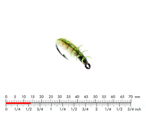 Caddis Larva 4 Green