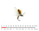 Mayfly Emerger 4 Olive Brown