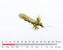 Stonefly Adult 4 Yellow