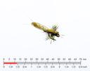 Stonefly Adult 5 Yellow