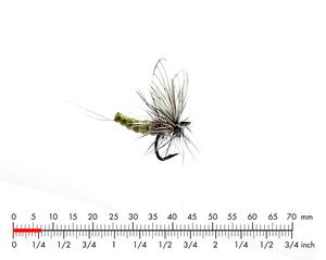 Mayfly Dun 5 Olive Grey