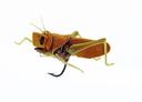 Hopper 1 Cinnamon Brown