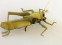 Hopper 4 Olive Green