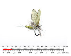 Mayfly Dun 4 Olive Grey