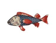 Fisk Miho, Heart Breaker