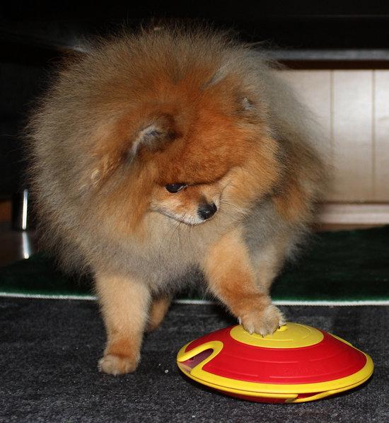Dog treat Maze. Small. Vaikeusastetta 2