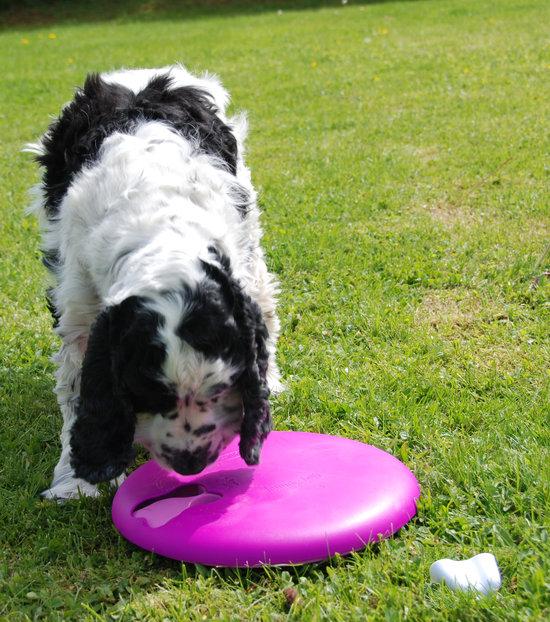 Dog/Cat Spinny plastica. Grado di difficoltá 1