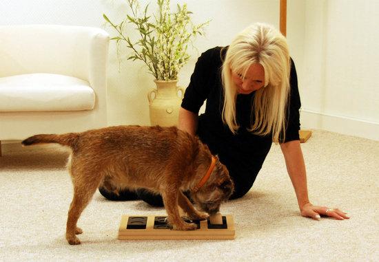 DogBrick tre. Vanskelighetsgrad 2. Natural, Eco-Friendly material