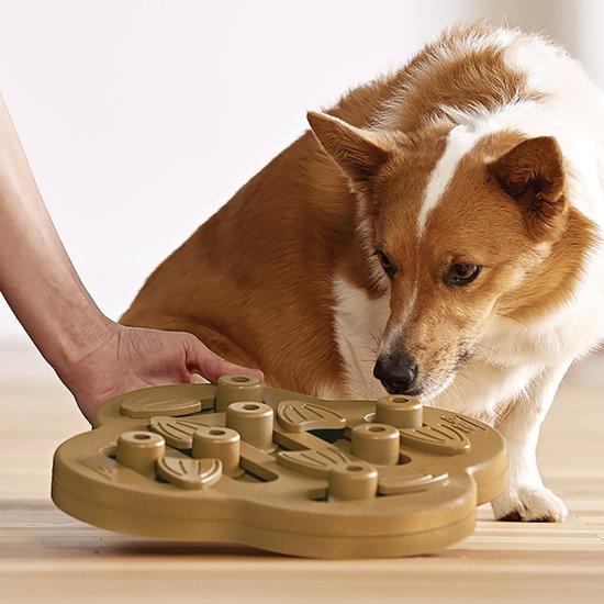 DOG HIDE N`SLIDE - COMPOSITE - NEW
