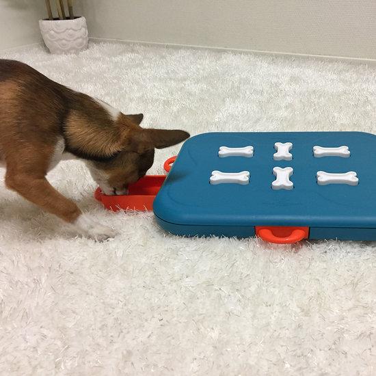 DOG CASINO - NEW