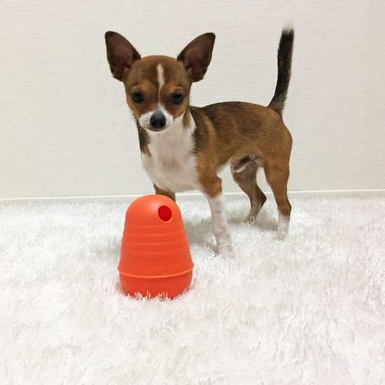 DOG PYRAMID - SMALL - NEW COLOR