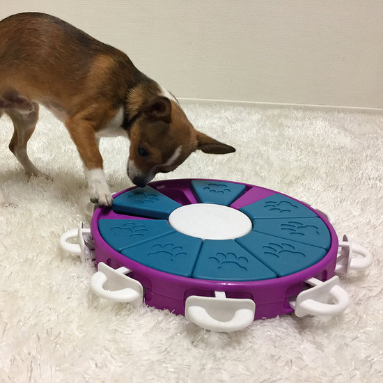 DOG TWISTER - NEW