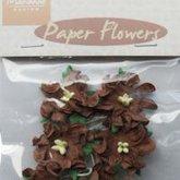 Blommor  Curly Mörkbruna 20 mm