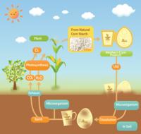 Bred matskål av bioplast