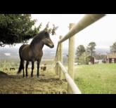 Slanor – bygg vackert staket