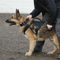 K9 Service Harness - Black