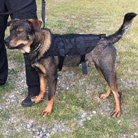 Spartan K9 Harness Black