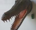 Krokodil Trofé