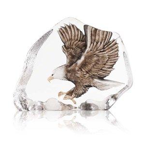Wildlife Sea Eagle