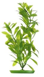 Marina - Hygrophila 50cm