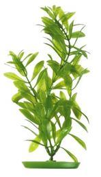 Marina - Hygrophila Polysperma 30cm