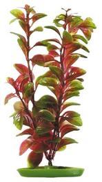 Marina - Röd Ludvigia 30cm