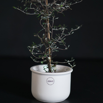 Tub small vit (cast Iron) - DBKD