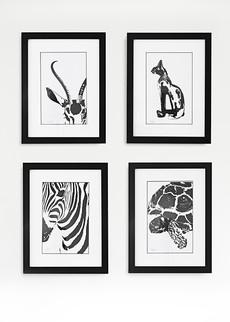 Picture Safari Antilope