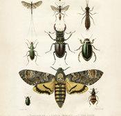 Juliste Hyönteiset 50 * 70 cm