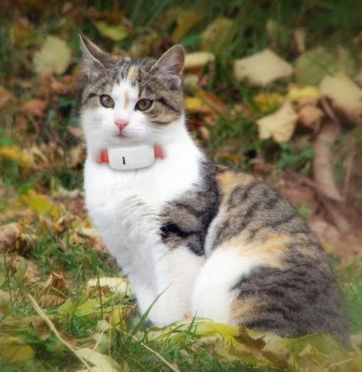 gps halsband till katt