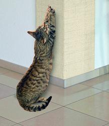 katt klöser på tapet