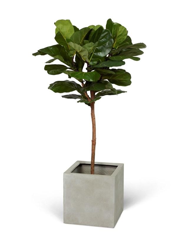 växt på stam