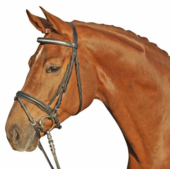 träns rea häst