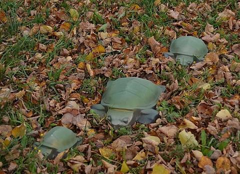 Plastform  Sköldpadda Large