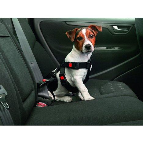 Bilsele til hund