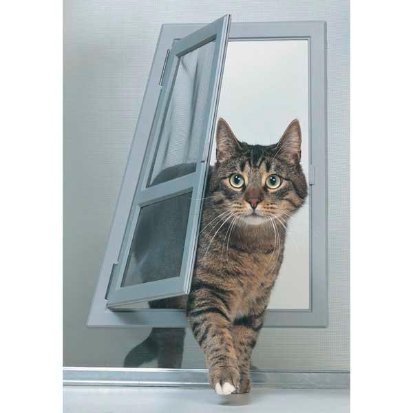 male calico cat behavior